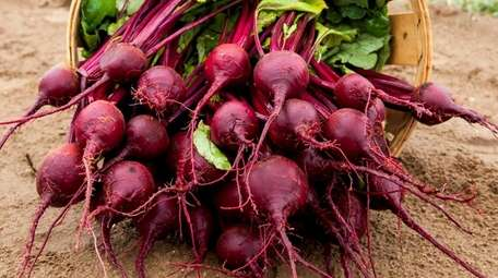 Planted now, beets can be harvested through Long