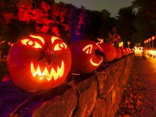 Illuminated pumpkins line a wall at The Great