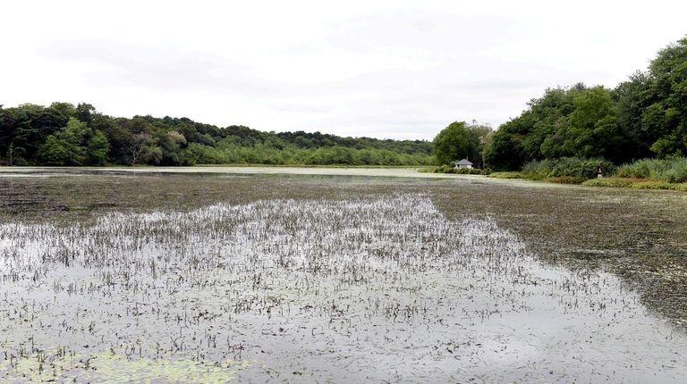 Lower Lake in Yaphank on Monday.