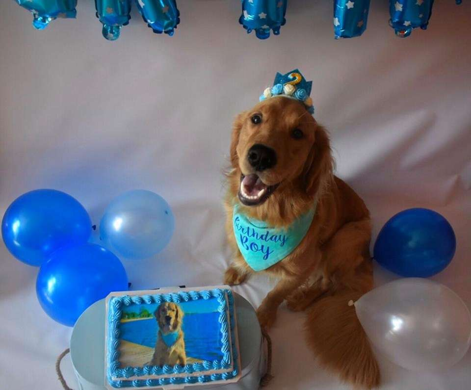 Charlie celebrating his second birthday with his special