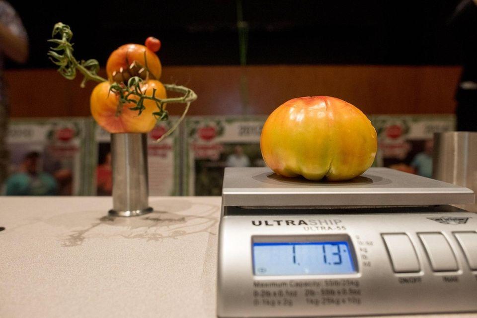 Arkapiusz Szczypior, of Lindenhurst, 41, weighs his tomato