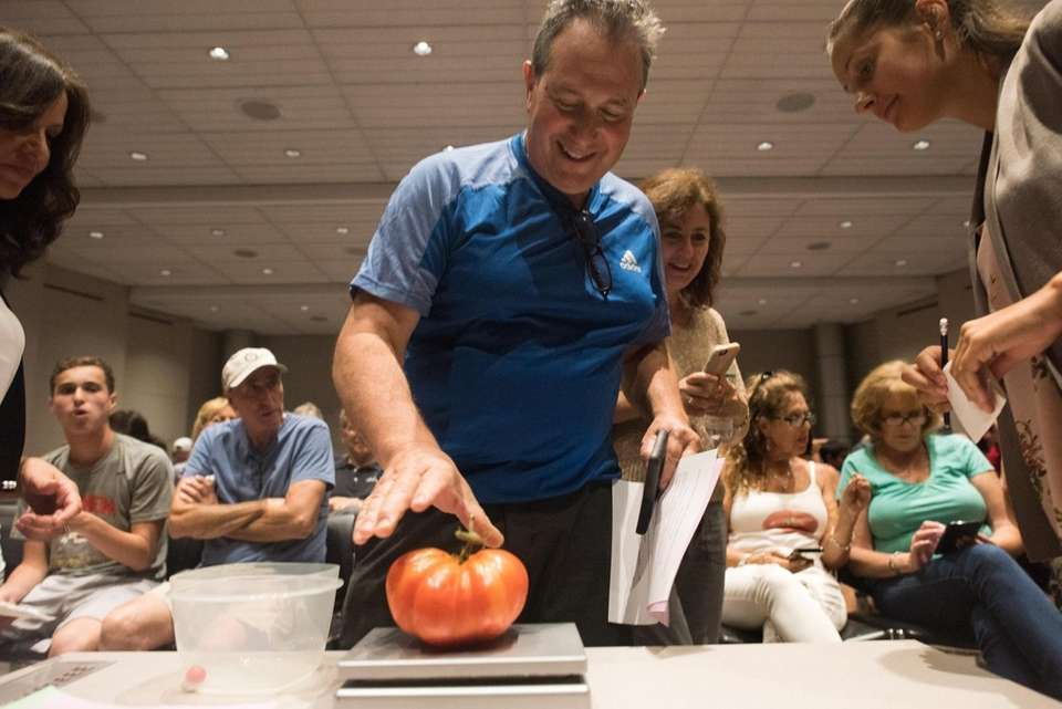 John Feder weighs his tomato during Newsday's annual