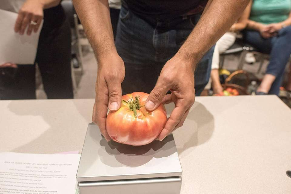 Frank Rasizzi, of Northport, weighs his tomato during