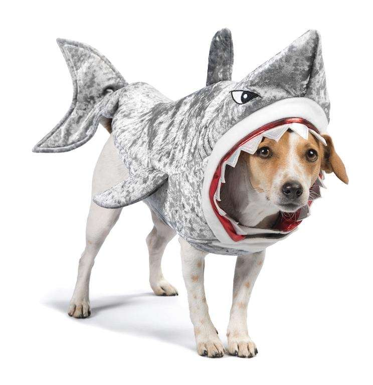 Halloween Costumes For Pets | Newsday
