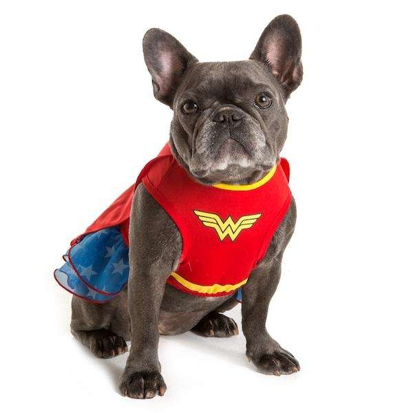 Your dog will be the ultimate crime fighter