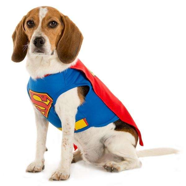 Now your dog can look like the superhero