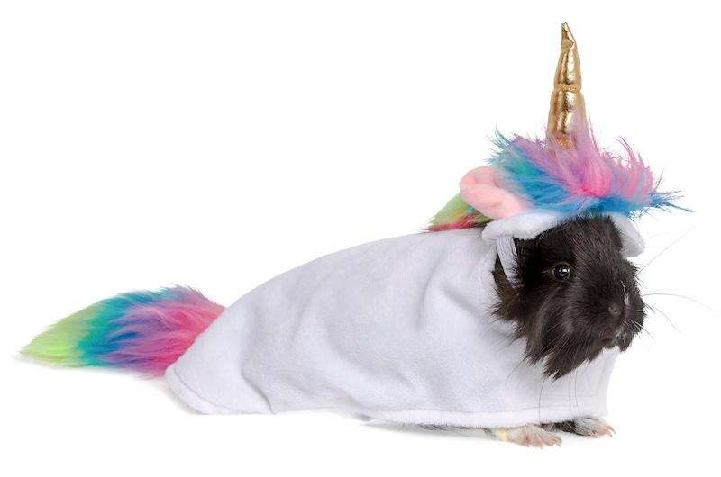 Turn your tiny pet into a magical unicorn