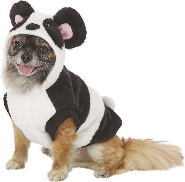 Dress your dog for comfort and warmth in
