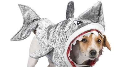 Transform your pup into an underwater sea creature