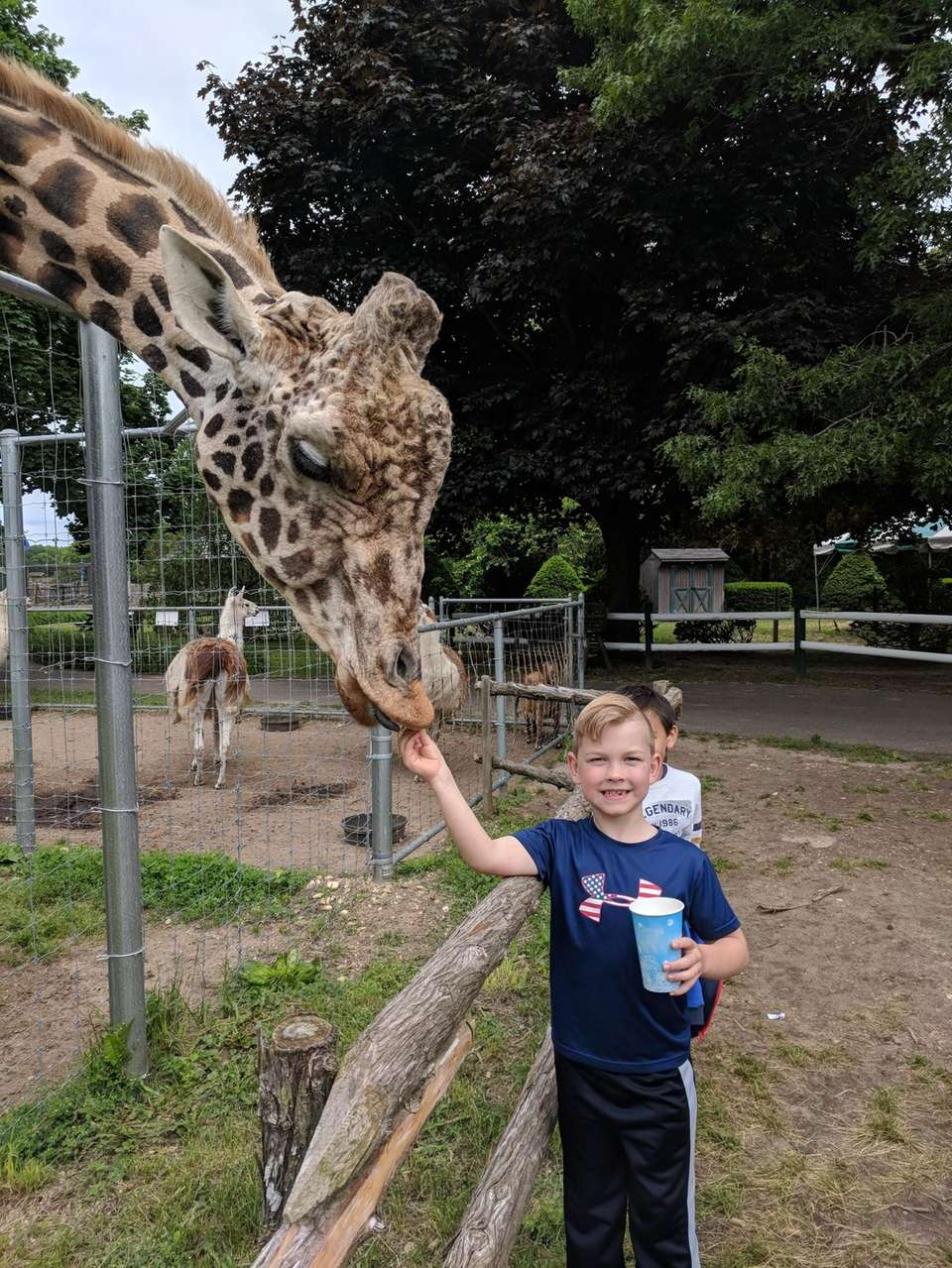 Preston Kohl feeding Clifford, the giraffe, at the
