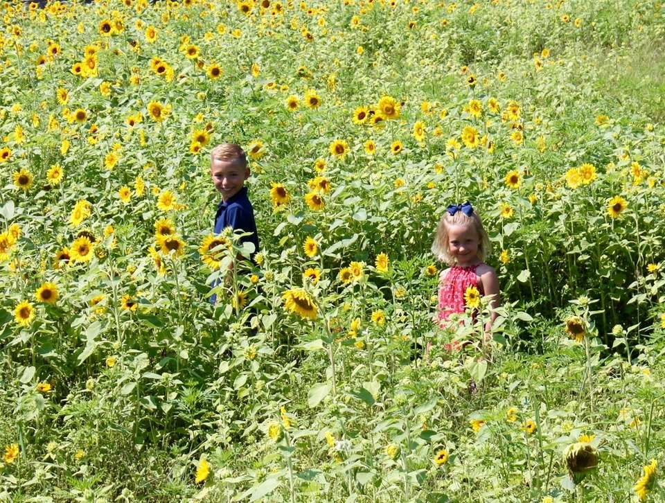Owen and Sadie enjoying the sunflowers in East