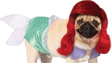 Your pet will cause a major splash in