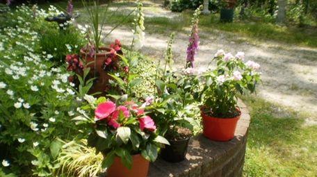Regina Phelps' garden at her home in Hauppauge.