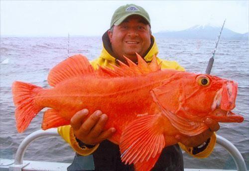 Nader Gebrin with a big orange fish