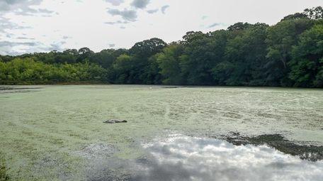Dead birds were found in Millers Pond in