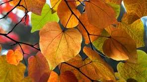 Tree branch with autumn leaves.