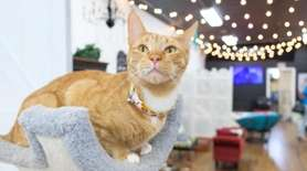 The Shabby Tabby Cat Café in West Sayville,