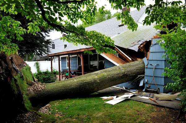 A tree crashed through two homes on Jupiter
