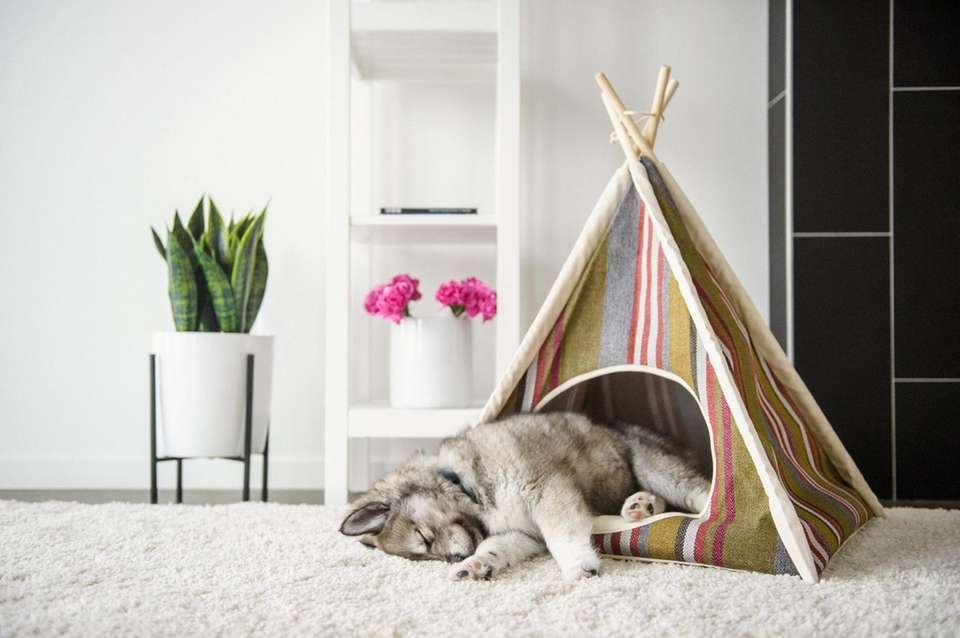 Your dog will love to lounge in one