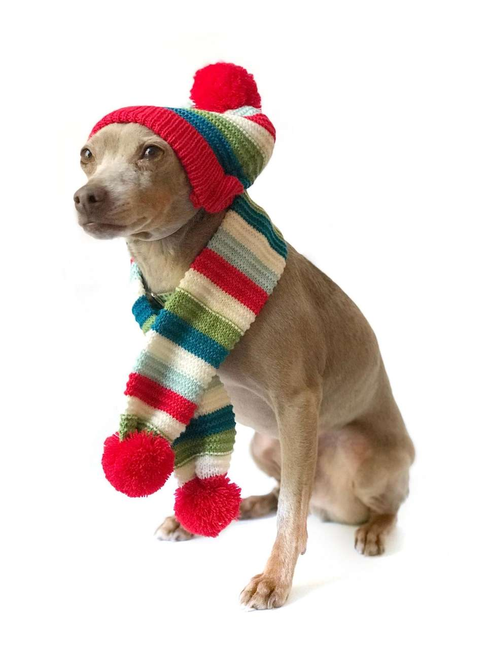 This knit hat will keep pets warm in