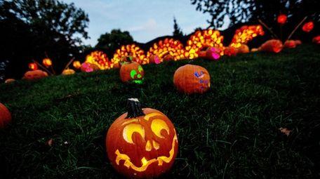 Carved and illuminated Jack o'lanterns a path at
