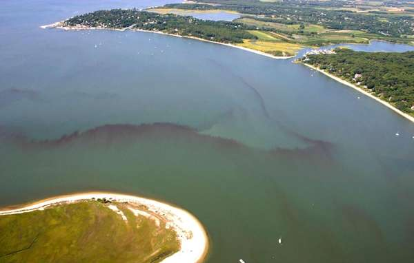An algae bloom, known as Red tide, has