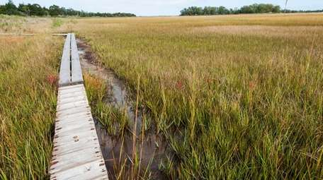A view of the marsh around Accabonac Harbor,