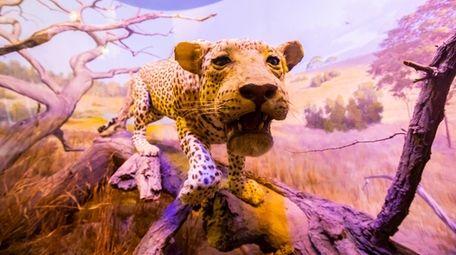 The Vanderbilt Museum in Centerport exhibits a range