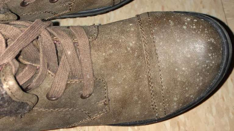 Mold clings to the shoes of SUNY Old