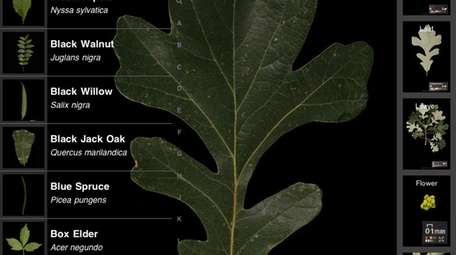 The Leafsnap app from Columbia University, the University