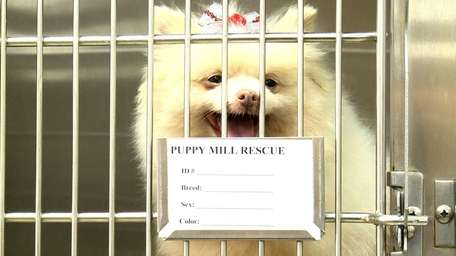 One of 102 dogs rescued from puppy mills
