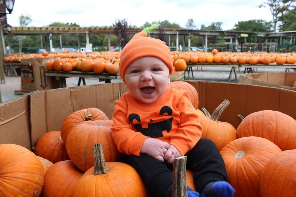 The cutest pumpkin in the patch! Hicks Nursery