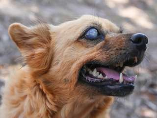 Blind dogs can lead happy lives.