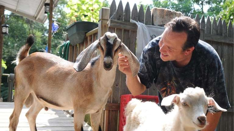 William Barbaro, with two of his surviving goats,