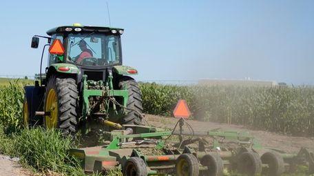 Farmer Tim Novotny, of Wahoo, shreds male corn