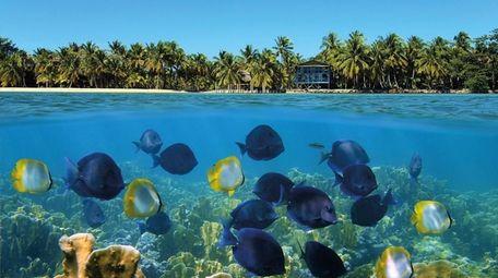 Colourful coral reefs off Bocas del Toro on
