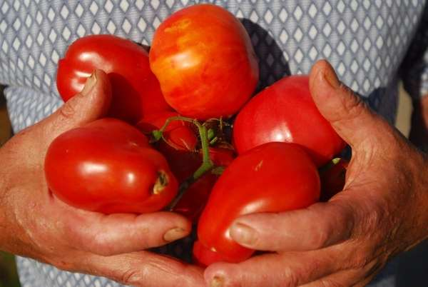 Long Islanders love their summer tomatoes.
