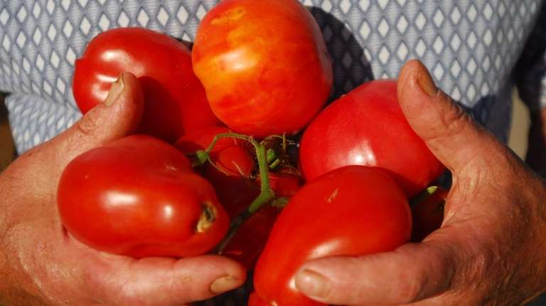 Long Islanders love their summer tomatoes.