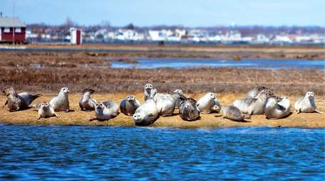 Seal-spotting aboard the Freeport Water Taxi's harbor tour.
