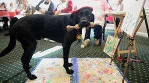 On Tuesday, Dagger DogVinci, a therapy dog who