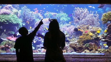 The Long Island Aquarium in Riverhead.