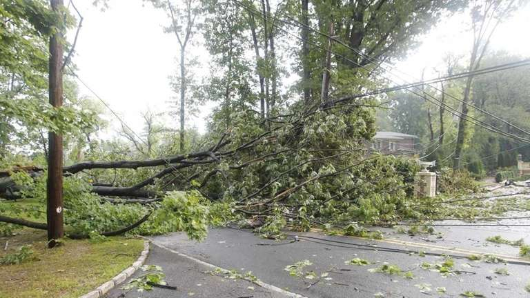 A tree covers the street at Kings Point