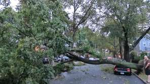 A tree blocks 70th Avenue in Forest Hills