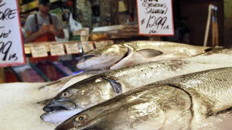 King salmon, also known as chinook, sit on