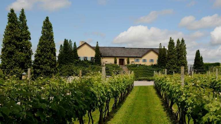 The vineyard extends practically to the front of