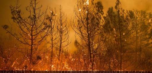 Flames climb trees as the Camp Fire tears