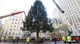 On Saturday, the Rockefeller Center Christmas tree was