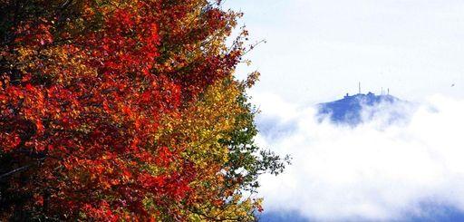 Fall foliage (Sept. 29, 2010)
