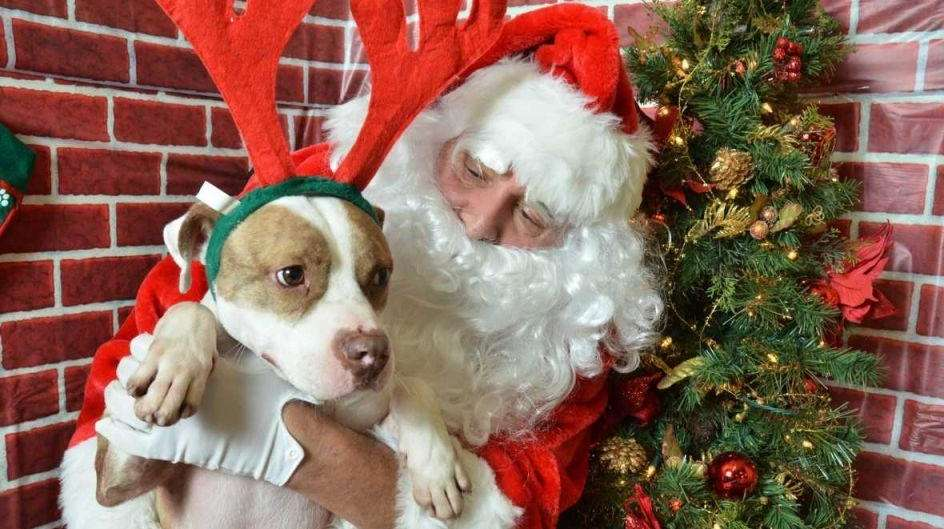 Petsmart Christmas Hours.Holiday Events For Pets On Long Island Newsday