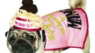 A bulldog as a plate of spaghetti &